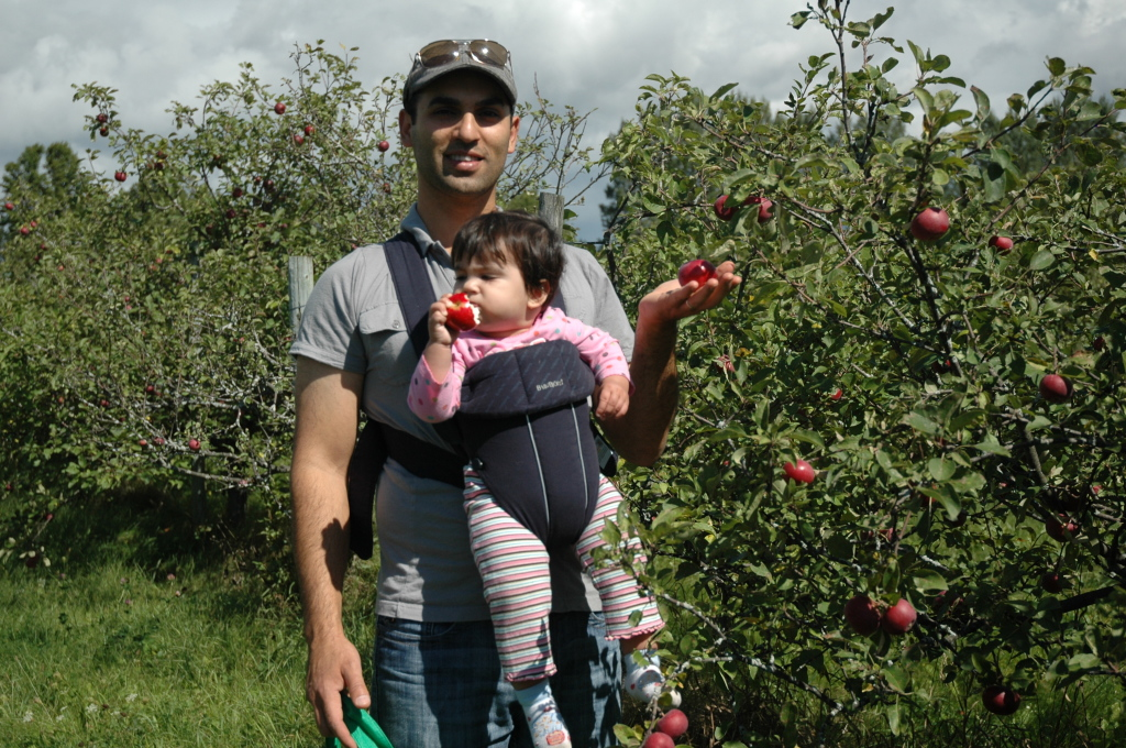 avalon organic apple orchard review