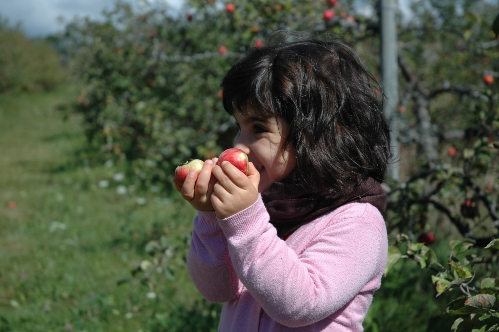 sheli_is_picking_apples